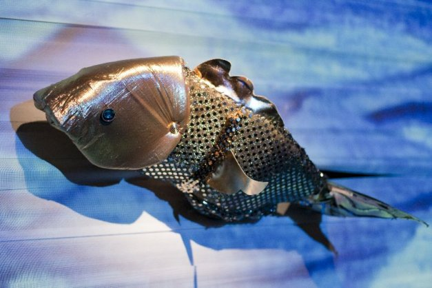 pesciolino-doro